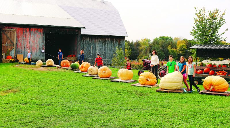 Giant pumpkin contest brings big competition