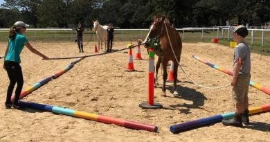 Chapeau ranch offers wellness through equine assistance